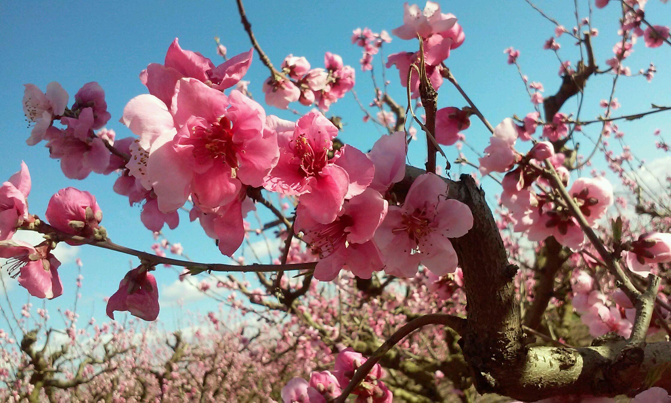 Foto floración