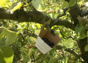 Colocación en el árbol